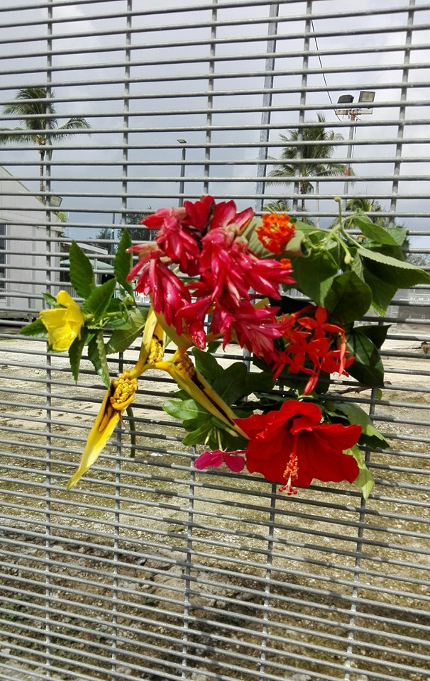 flowers-from-mohammad-ali-malekis-garden-on-the-fences-of-manus-island-copy